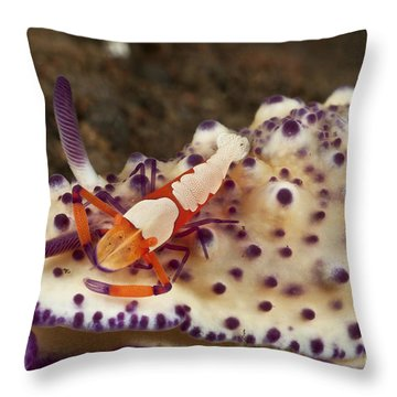 Nudibranch With Orange Emperor Shrimp Throw Pillow by Mathieu Meur