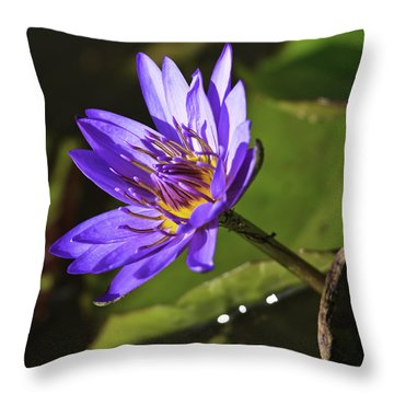 Nymphaea 'panama Pacific' Throw Pillow