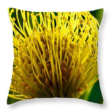Picture Of A Pincushion Protea Throw Pillow