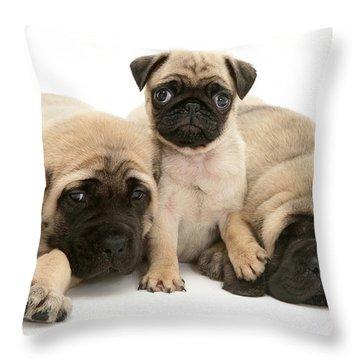 Pug And English Mastiff Puppies Throw Pillow by Jane Burton