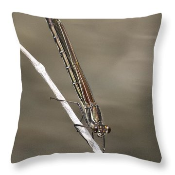 Throw Pillow featuring the photograph Red Bluet by Betty Depee