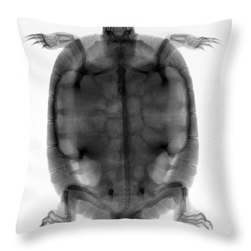 Red-eared Slider Turtle X-ray Throw Pillow by Ted Kinsman