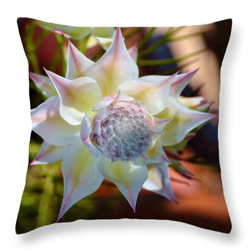 Serruria Rosea Throw Pillow