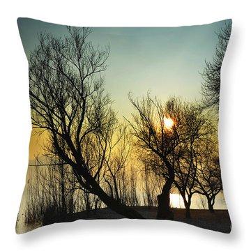 Sunlight Between The Trees Throw Pillow
