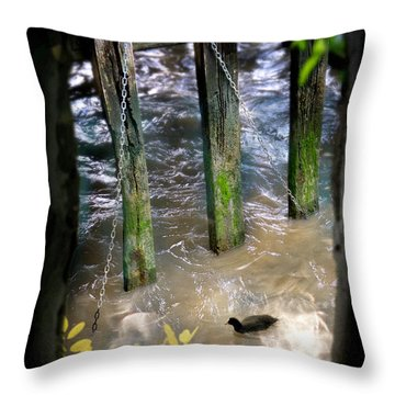 Throw Pillow featuring the photograph Thames Coot by Richard Piper