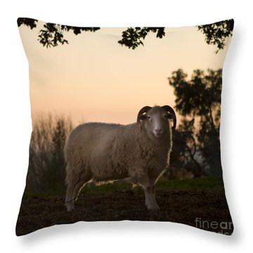 The Lamb Throw Pillow