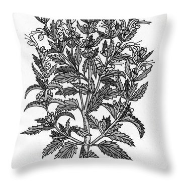 Turkey Balm Throw Pillow by Science Source