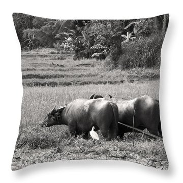 Water Buffalo Throw Pillow by Jane Rix
