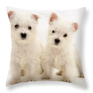 West Highland White Terriers Throw Pillow by Jane Burton