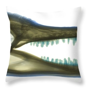 X-ray Of American Alligator Throw Pillow by Ted Kinsman