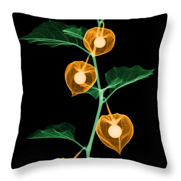X-ray Of Chinese Lantern Plant Throw Pillow by Ted Kinsman