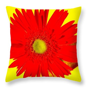 2024a2-001 Throw Pillow by Kimberlie Gerner
