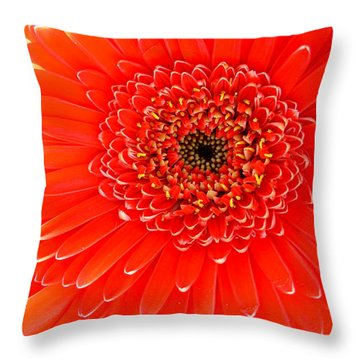 2153a-002 Throw Pillow by Kimberlie Gerner