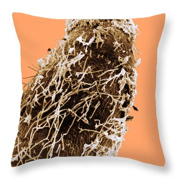Bacteria On Sorghum Root Tip Throw Pillow by Science Source