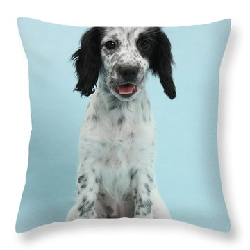 Border Collie X Cocker Spaniel Puppy Throw Pillow by Mark Taylor