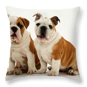 Bulldog Pups Throw Pillow by Jane Burton