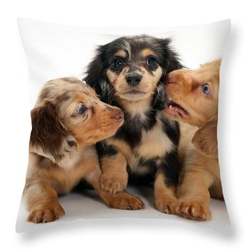Dachshund Pups Throw Pillow by Jane Burton