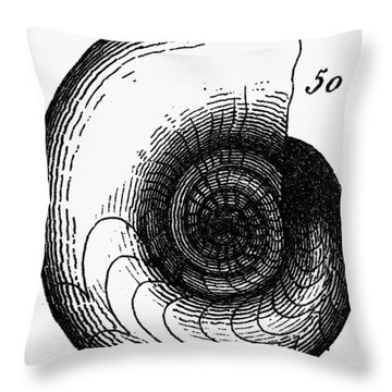 Fossil: Jurassic Period Throw Pillow by Granger
