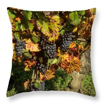 Grapes Growing On Vine Throw Pillow by Bernard Jaubert