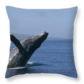 Humpback Whale Breaching Maui Hawaii Throw Pillow by Flip Nicklin