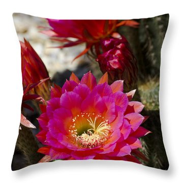 Pink Cactus Flowers Throw Pillow by Jim And Emily Bush
