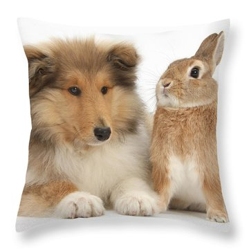Rough Collie Pup With Rabbit Throw Pillow by Mark Taylor