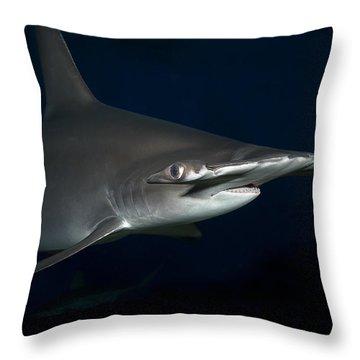 Hammer Head Shark Throw Pillows