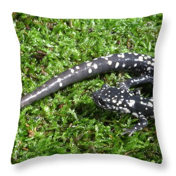 Slimy Salamander Throw Pillow by Ted Kinsman