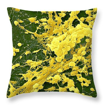 Staphylococcus Biofilm Throw Pillow by Science Source