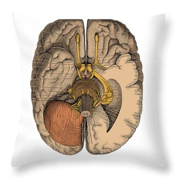 Undersurface Of The Brain Throw Pillow