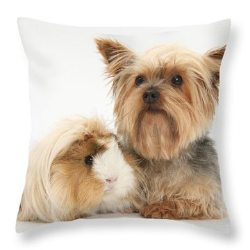 Yorkshire Terrier And Guinea Pig Throw Pillow by Mark Taylor