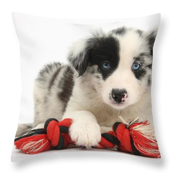 Border Collie Pup Throw Pillow by Mark Taylor