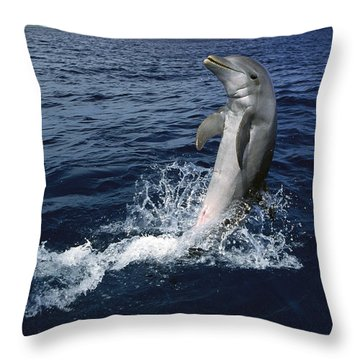 Bottlenose Dolphin Tursiops Truncatus Throw Pillow by Konrad Wothe
