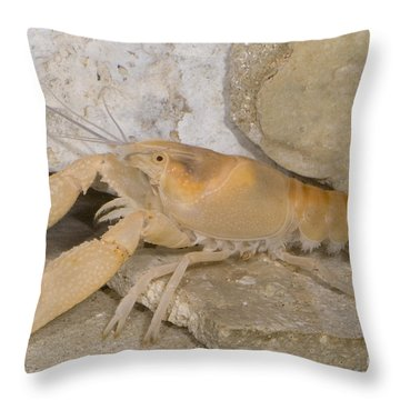 Miami Cave Crayfish Throw Pillow