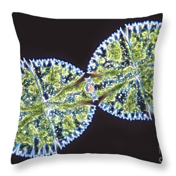 Micrasterias Denticulata Throw Pillow by M. I. Walker