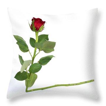Red Tulip Throw Pillow by Bernard Jaubert