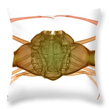 X-ray Of Deep Water Crab Throw Pillow by Ted Kinsman