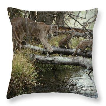 A Mountain Lion, Felis Concolor Throw Pillow by Jim And Jamie Dutcher