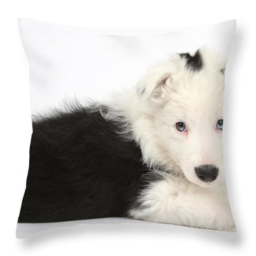 Border Collie Puppy Throw Pillow by Mark Taylor