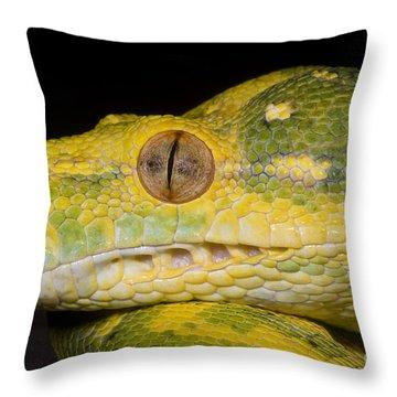 Green Tree Python Throw Pillow