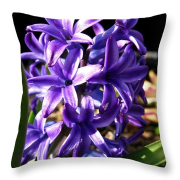 Hyacinth Named Peter Stuyvesant Throw Pillow by J McCombie