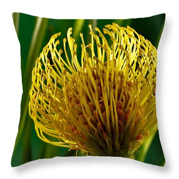 Picture Of A Pincushion Protea Throw Pillow by Perla Copernik