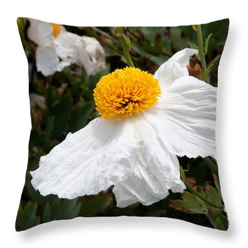Along Big Sur Throw Pillow by Carol Ailles