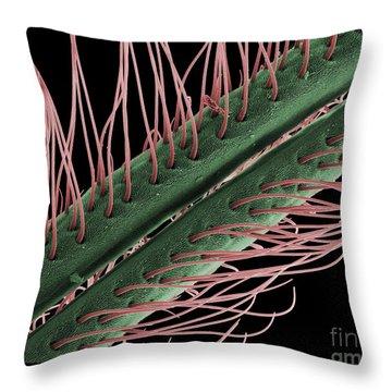 Luna Moth Antennae, Sem Throw Pillow by Ted Kinsman