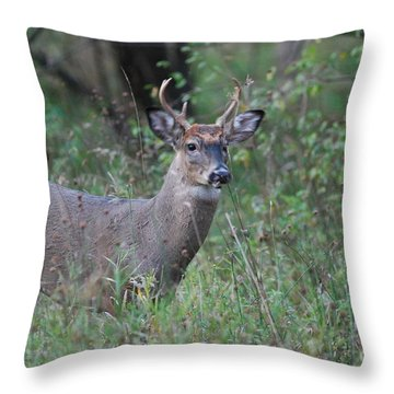 6 Point Buck Throw Pillow by David Murray