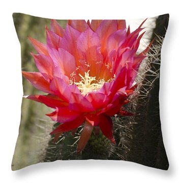 Red Cactus Flower Throw Pillow by Jim And Emily Bush