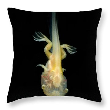 African Clawed Frog Tadpole Throw Pillow by Dante Fenolio