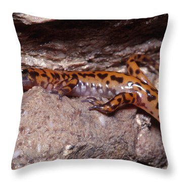 Cave Salamander Throw Pillow by Dante Fenolio