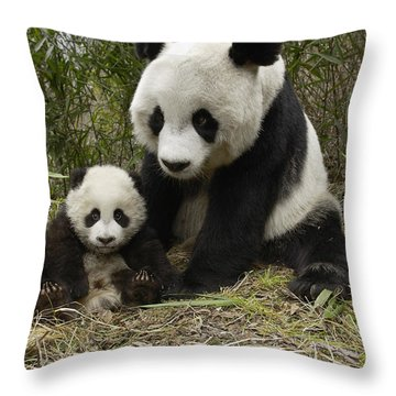 Giant Panda Ailuropoda Melanoleuca Throw Pillow by Katherine Feng