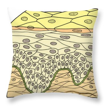 Illustration Of Stratified Squamous Throw Pillow by Science Source